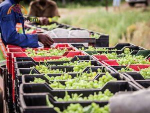 Business   Agriculture   Carpe Diem